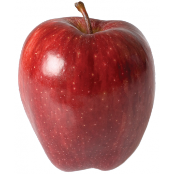 American Apple Big Fruits