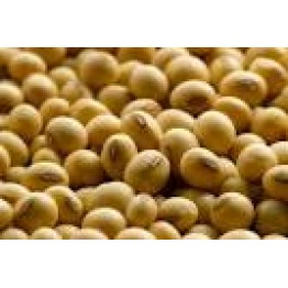 Soyabean seeds  healthy foods