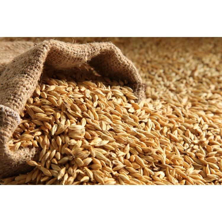 Jau Barley